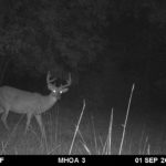 Night shot of a beautiful buck