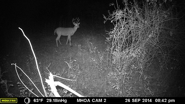 A nice 8 point buck over a mineral block