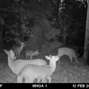 Deer around feeder